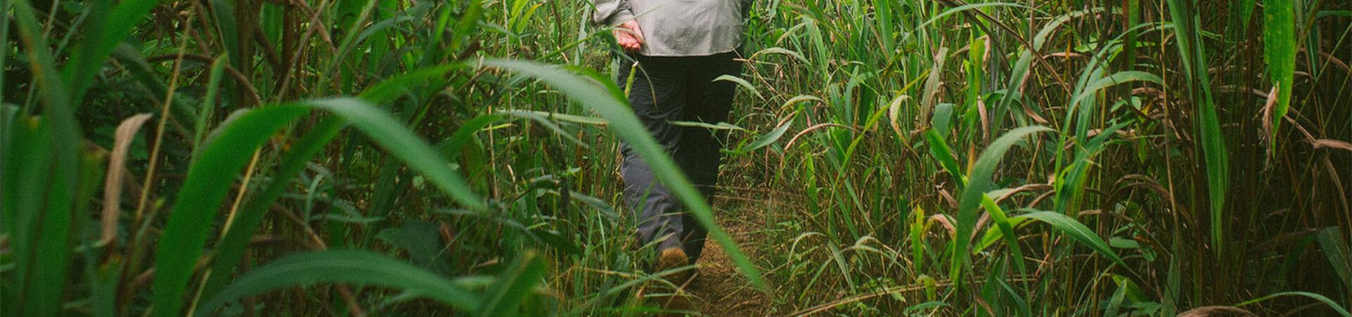 Banner - Cultiver des écosystèmes prospères en Ouganda