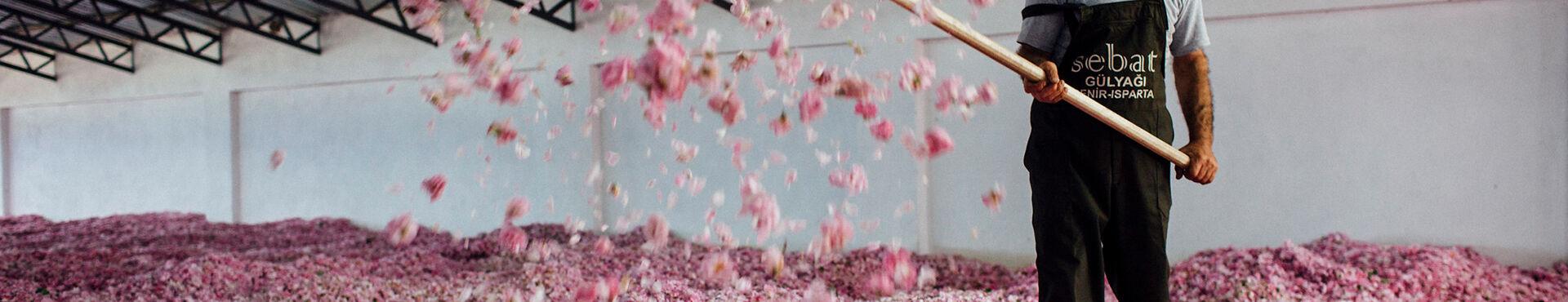 Banner - Les bienfaits de la rose sur votre peau et vos cheveux