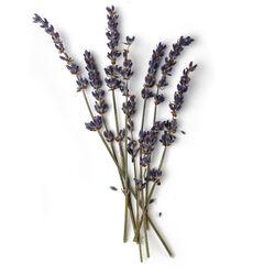 French Lavender Oil (Lavandula Angustifolia)