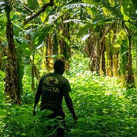 Cultivating Flourishing Ecosystems in Uganda