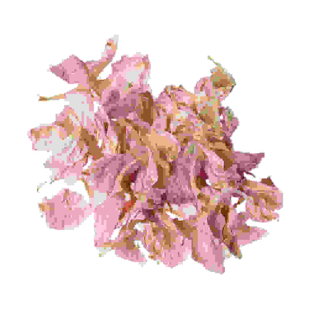 Pétales de delphinium rose