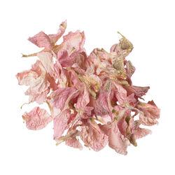 Pink Delphinium Petals