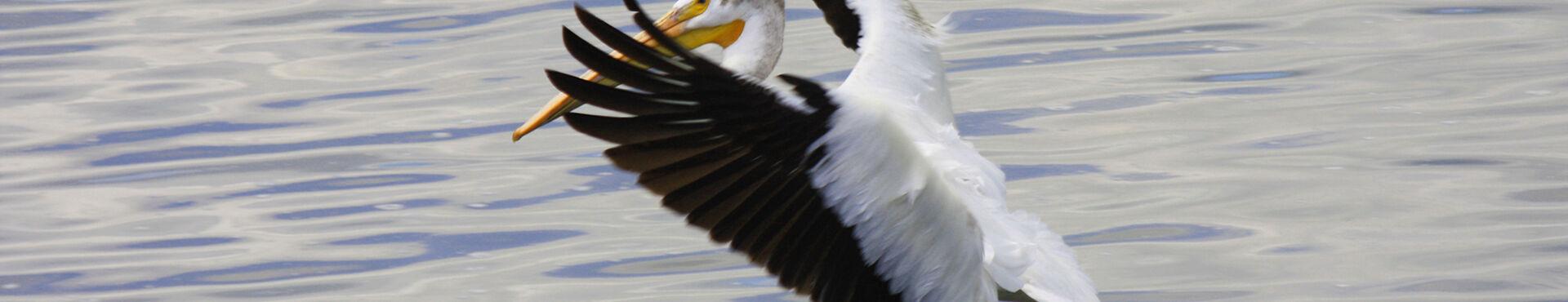 Banner - International Wildlife Rehabilitation Council