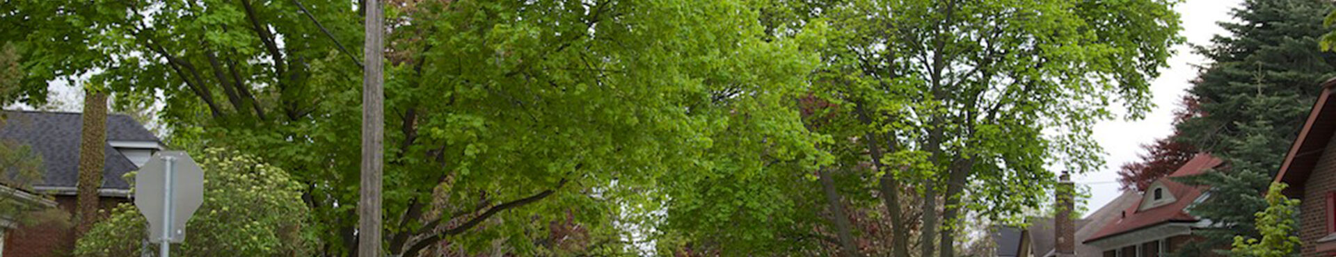 Banner - Hamilton Naturalists' Club