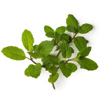 English Peppermint Oil