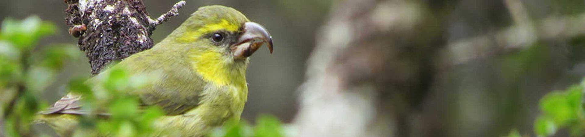 Banner - Maui Bird Recovery Trust