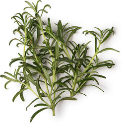 Sage, Rosemary and Juniperberry Infusion
