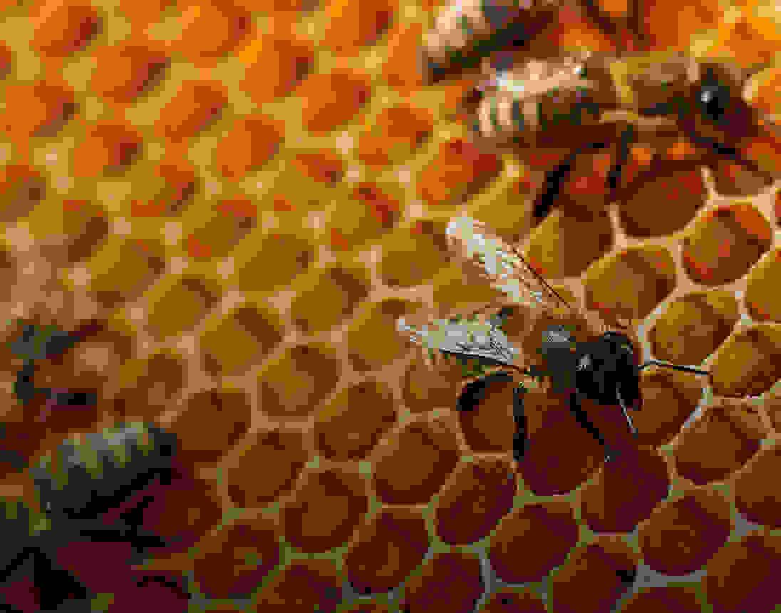 Miel équitable