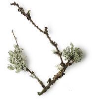 Oak Moss Extract