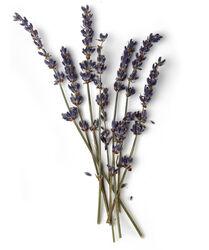 Infusion de fleurs de lavande