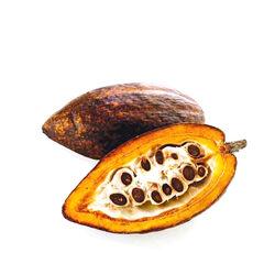 Absolu de cacao