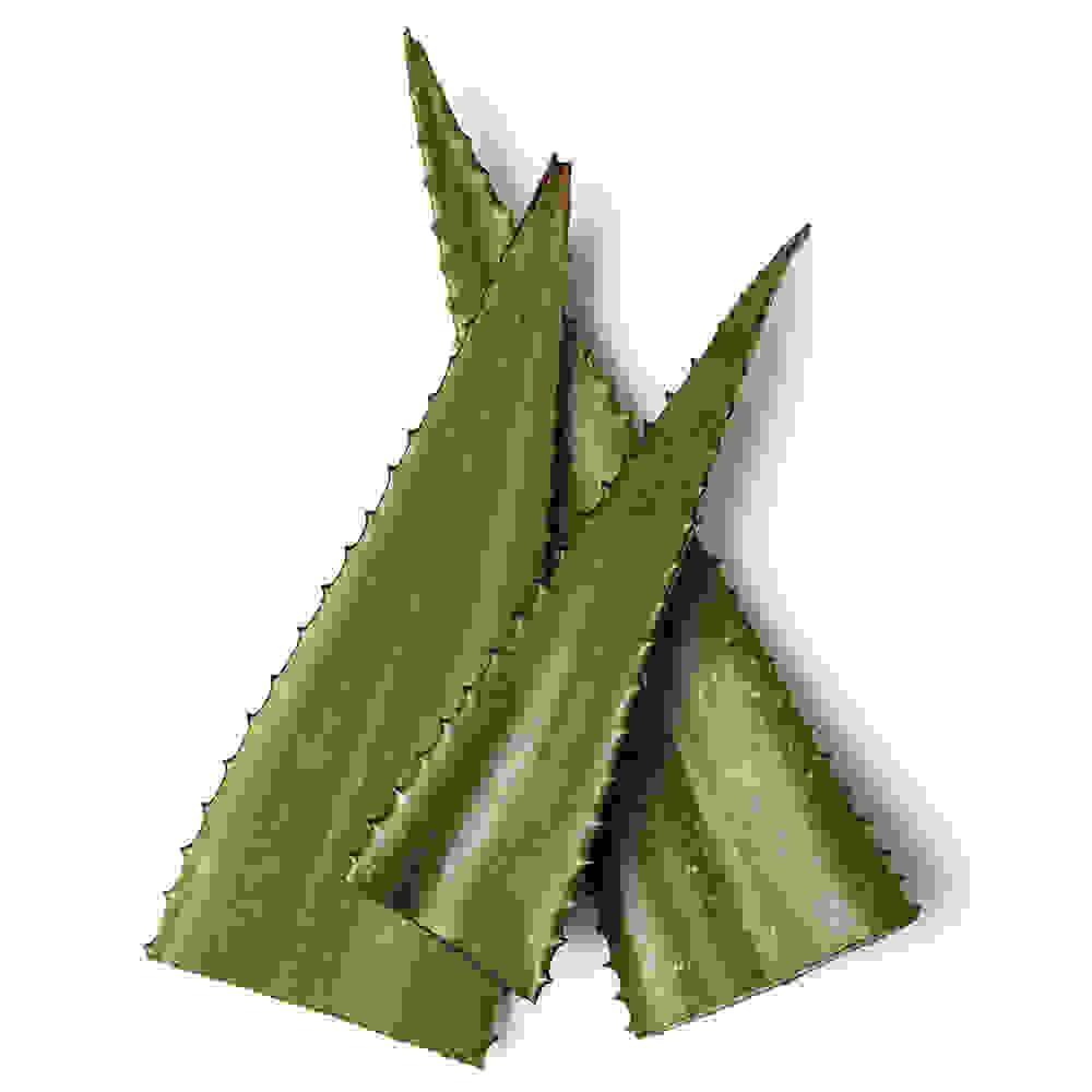 Fresh Aloe Gel (Aloe Secundiflora)