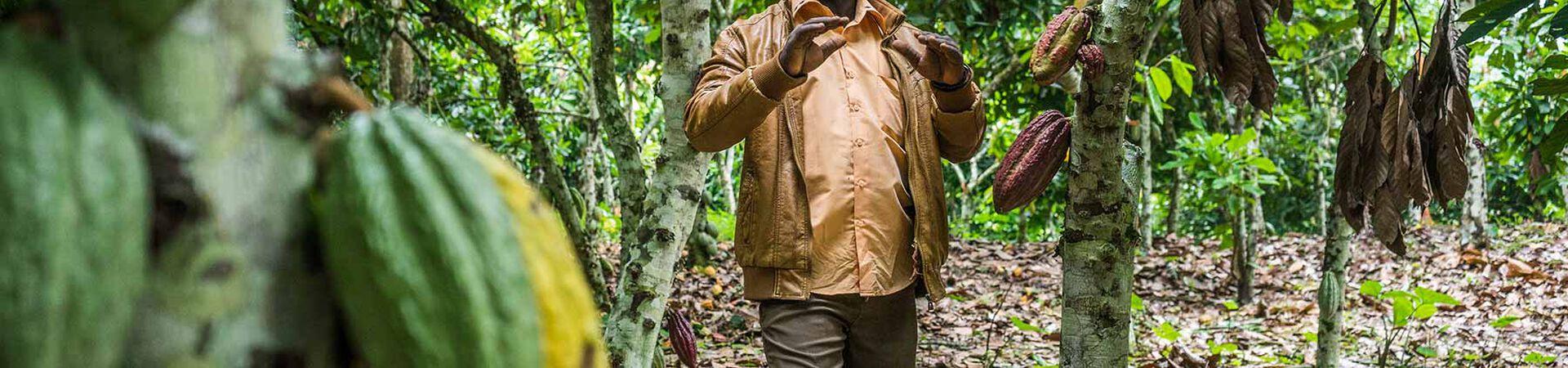 Banner - Growing Peace Through Cocoa in Congo