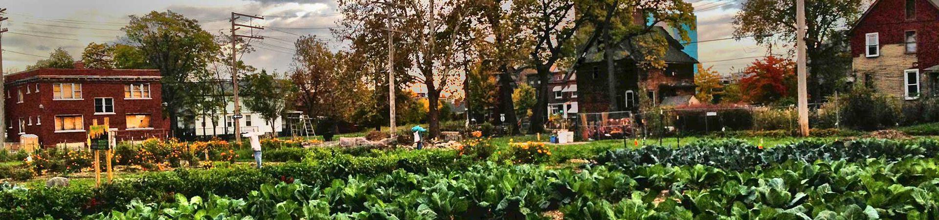 Banner - Michigan Urban Farming Initiative