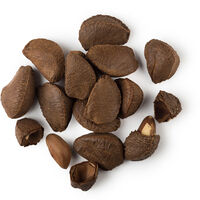 Brazil Nut Oil