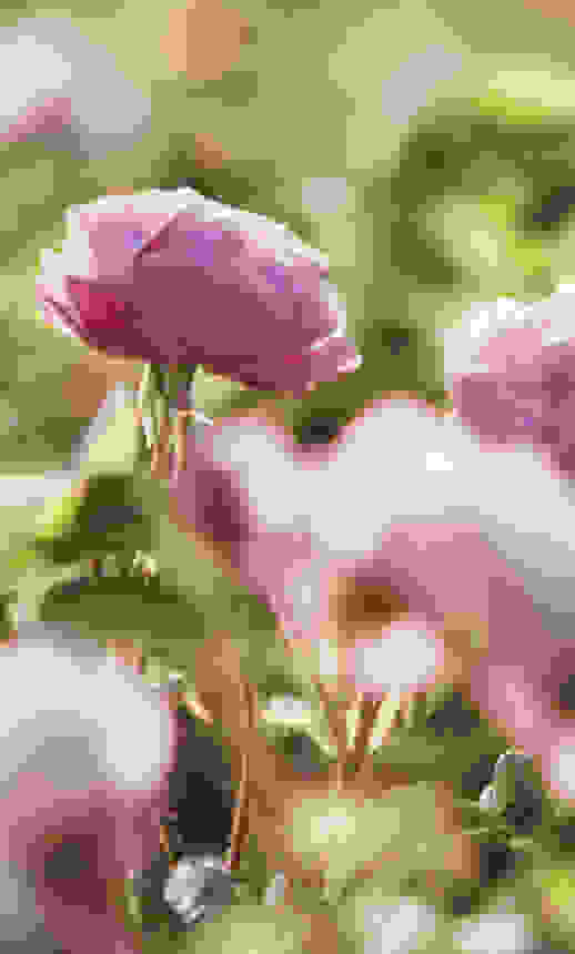 Rose Water ingredient benefits