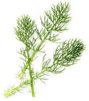 Powdered Horsetail Herb