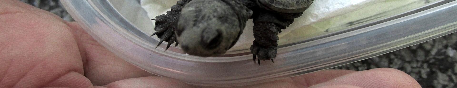 Banner - Dundas Turtle Watch
