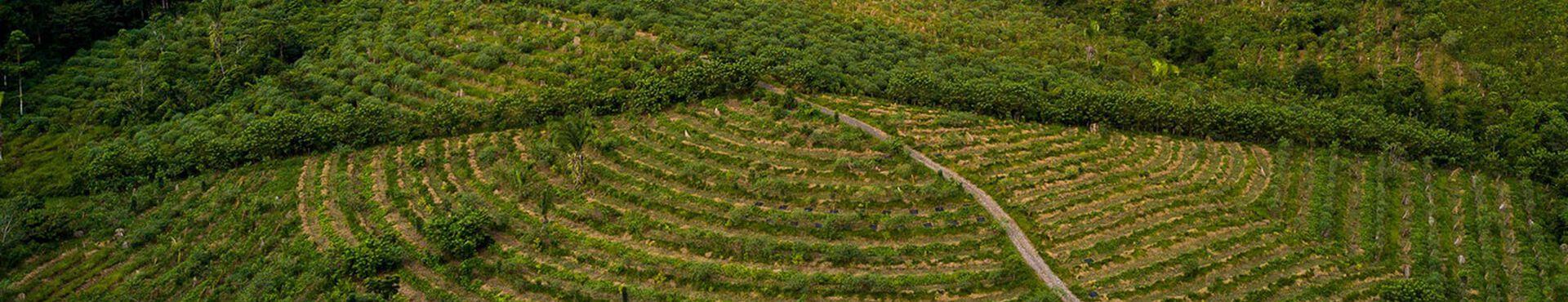 Banner - What is Regenerative Farming?
