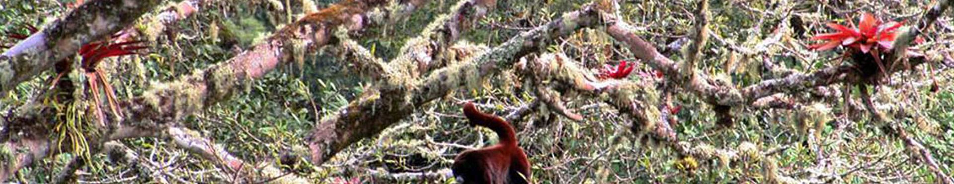 Banner - Neotropical Primate Conservation Peru