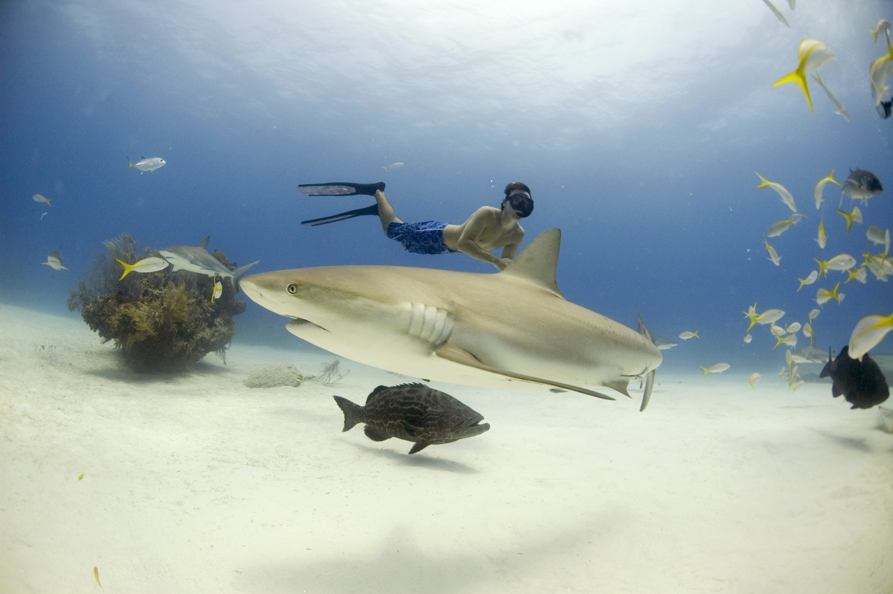 Rob Stewart swims with sharks