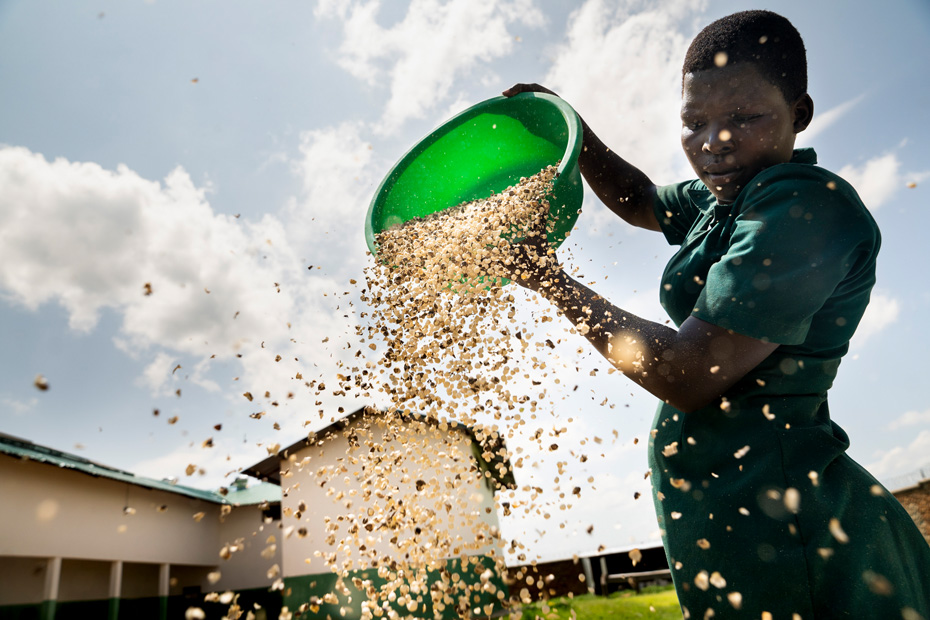 A person stands tall, dropping moringa seeds from a green bowl against a backdrop of a blue cloudy sky.