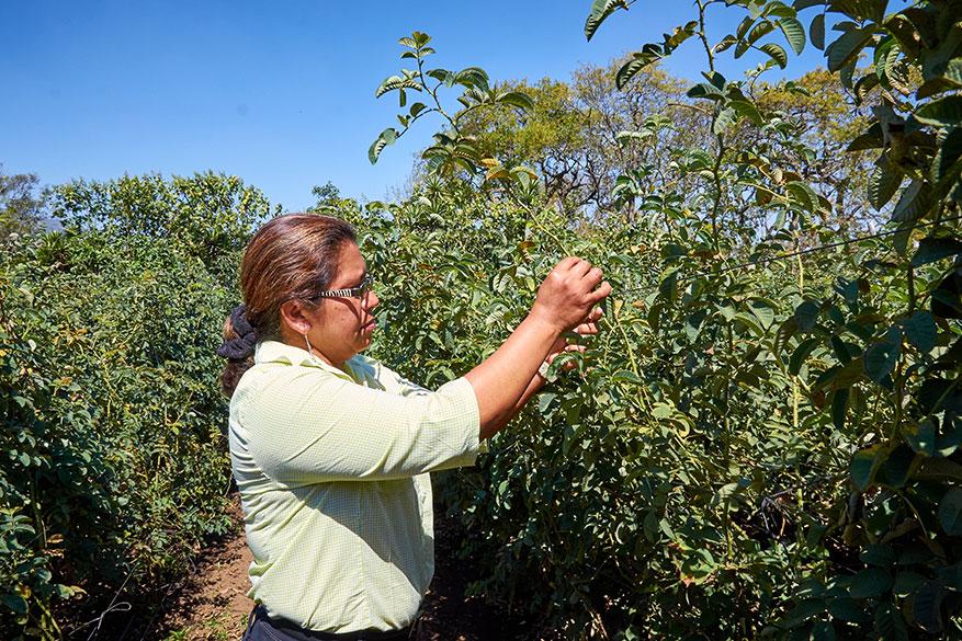 Centro de Desarrollo Integral Guatemalteco women's cooperative