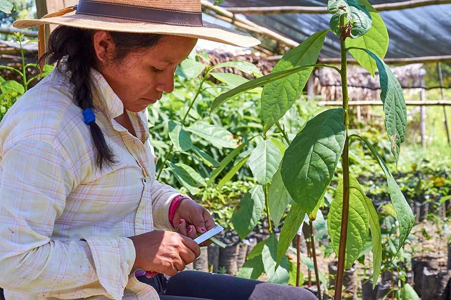 Lush Farm Guatemala