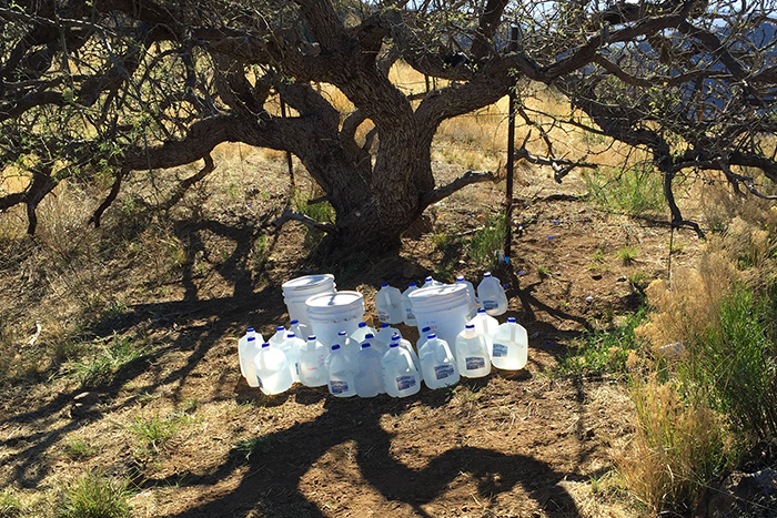 Gallons of water left in the desert under a tree