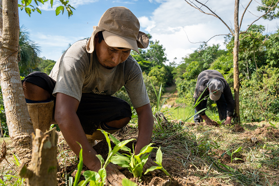 Two farmers planting seedlings near some trees, one farmer in the background and one farmer kneeling in the foreground.